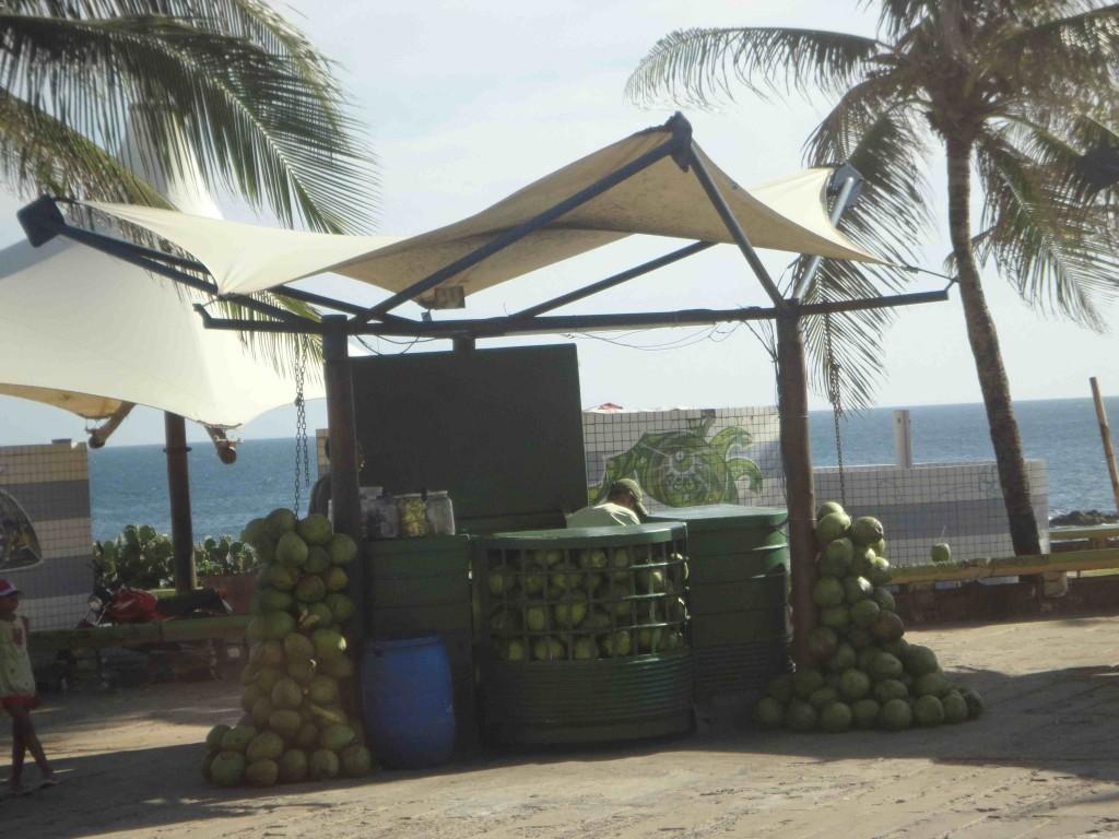 Leckere gekühlte Kokosmilch gibt es in Bahia an jeder Straßenecke. ©Miriam Eckert