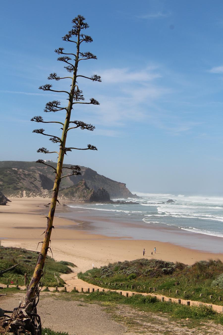 Strand Amado bei Carrapateira, Algarve