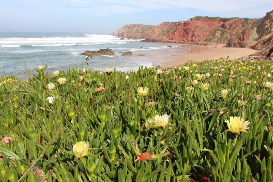 Strand Amado Blumen